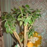 Домашние деревья
