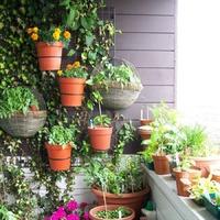 Озеленяем балкон и лоджию