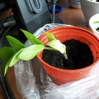 Про замиокулькас или про отношение мужа к моему увлечению растениями.