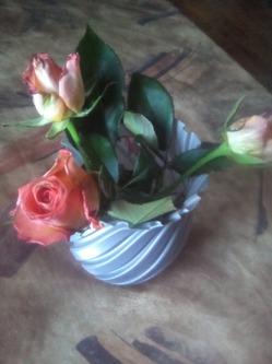 Опять эксперимент. Черенкование роз.