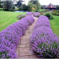 Оформление садовых дорожек. Подбор растений