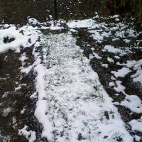 Как мой огород ушел под зиму не копанным.