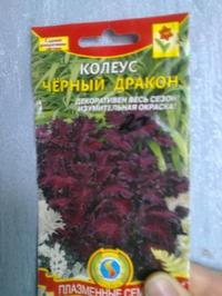 Колеусы из семян