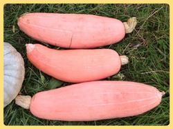 Необычные тыквы