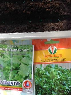 Как КУКАРАЧА. посеяла салат