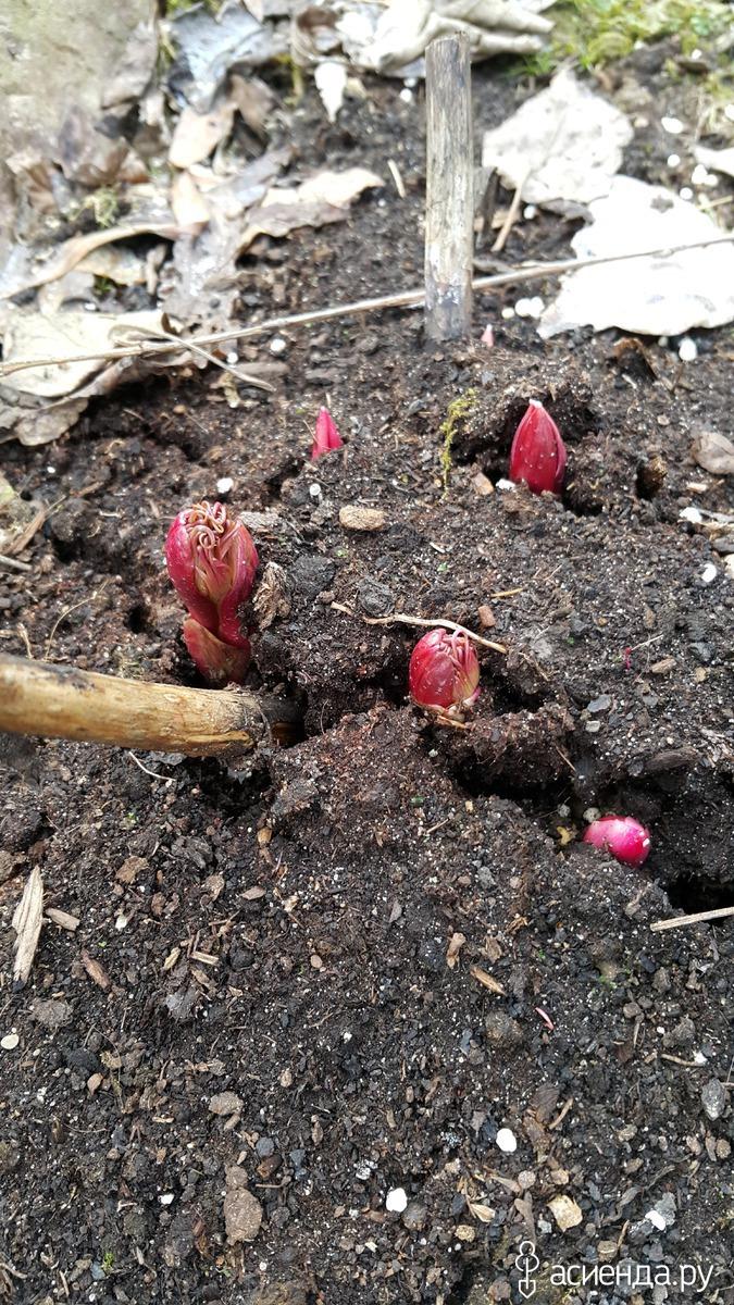 Букеты бутоньерки цветы марьин корень сделать букет