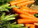 Подзимний посев овощей - посев под зиму