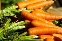 Посев моркови: с ранней весны и до глубокой осени