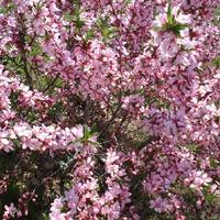Весна в моем саду