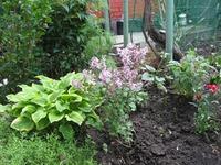 В моем саду новичок