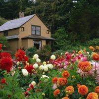 Какие посадить цветы?