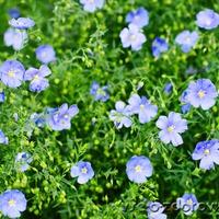 Самые неприхотливые цветы в моем саду