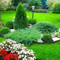 Оформление и дизайн газона