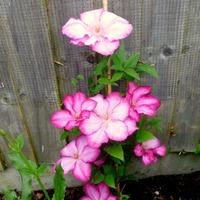 А цветы показать??? Так, не цветёт ж ничего!