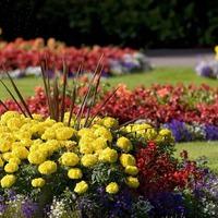 Клумбы и миксбордеры из низкорослых цветов