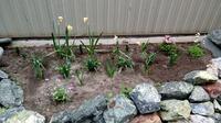 Чем засадить клумбы с первоцветами?