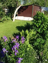 У Кукарачи на даче растут maniны арбузы и дыни
