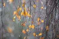 Ноябрь в саду и в огороде
