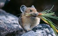 Мыши на даче: что делать?