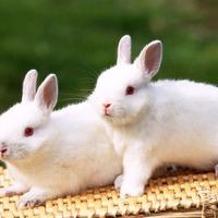 Хотите развести кроликов?
