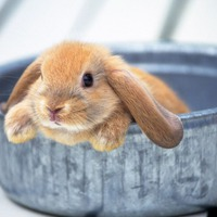 Профилактика болезней кроликов