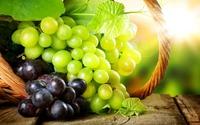 Лучшие сорта винограда для изготовления вин