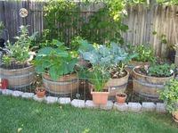Защита растений от болезней и насекомых