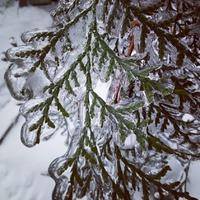 Ледяной дождь в Подмосковье