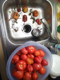 Хранение помидор и фитофтора