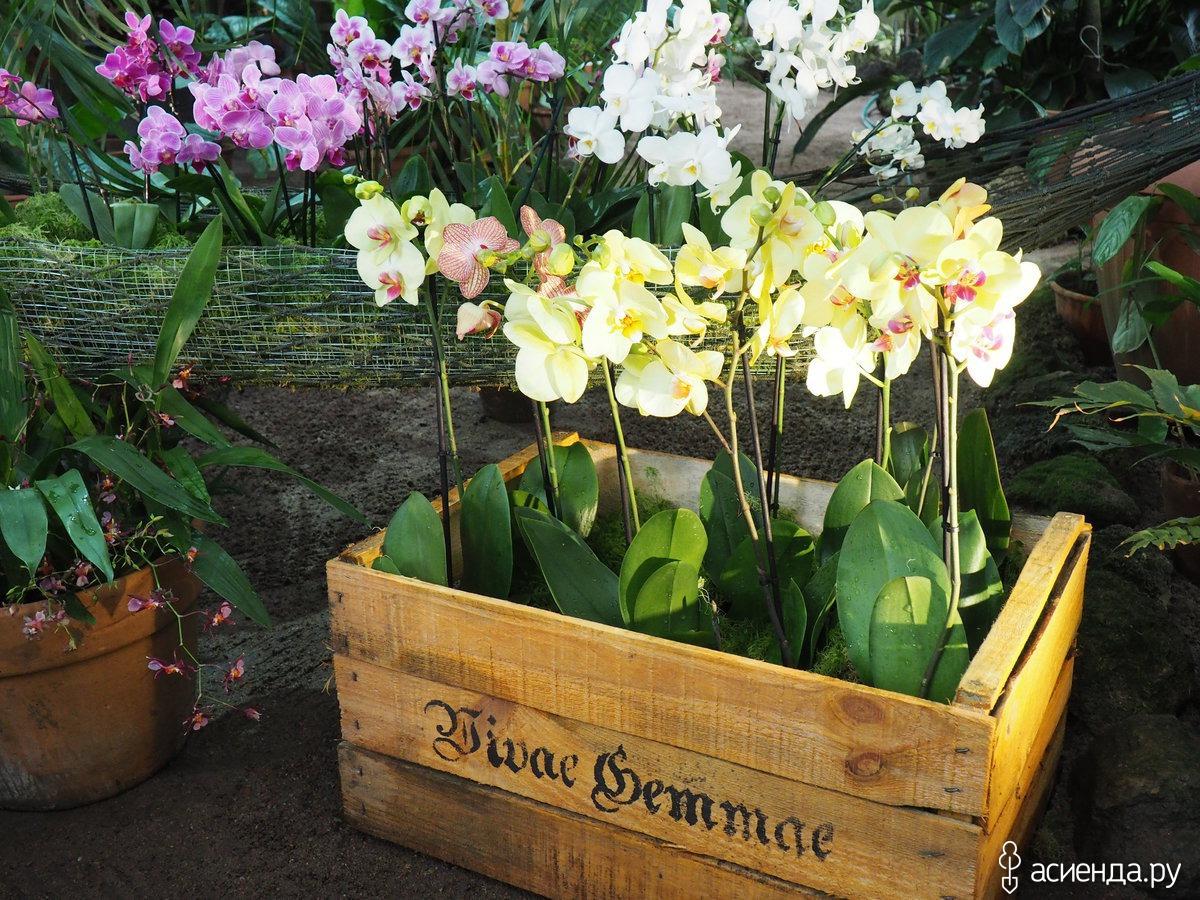 Выставка орхидей в ботаническом саду