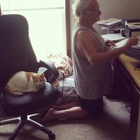Если в доме кошка, то неизвестно, кто кого приручил