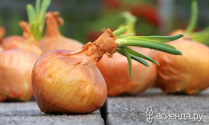 Зеленной конвейер полезных овощей зимой