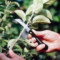 Вы всё знаете про прививочный нож?