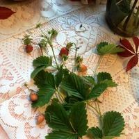 Из чего наша семья заваривает чай или волшебные травы нашего края!