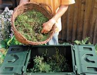 Падалица в компосте