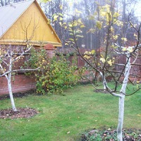 Осенняя обрезка плодоносящих деревьев