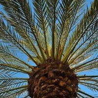 Пальма: заморская диковинка в наших домах