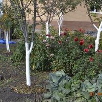 Подготовка сада и огорода к зиме.