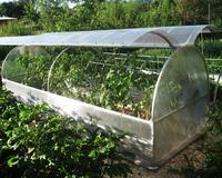 Высадка растений в парники и теплицы