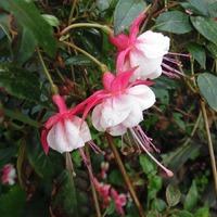 14 октября 2016. Цветы еще цветут