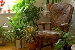 Энергетика растений и наш дом
