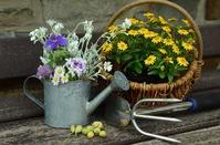 Полив комнатных растений – что нужно знать?