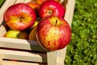 Хитрости зимнего хранения фруктов