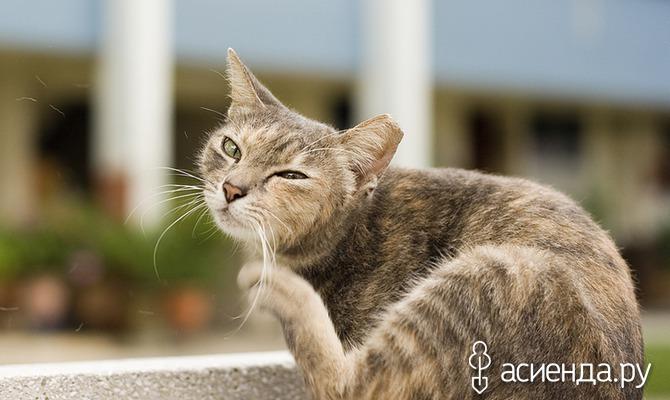 «Скорая помощь» кошке на даче