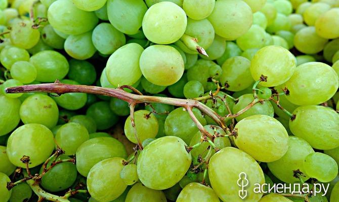 Сбор винограда: в чем и где хранить урожай?