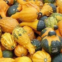 Декоративные съедобные овощи