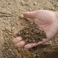 Удобрения для земляники и подкормки осенью