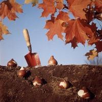 Что сажать осенью на даче или огороде?