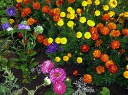 Цветы в сентябре: что сажать и как ухаживать?