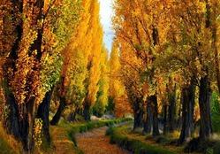 А вот и снова осень закружила...